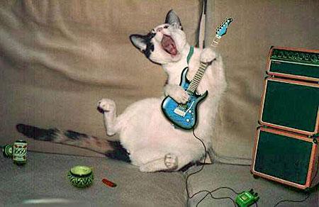 musikk-katt.jpg