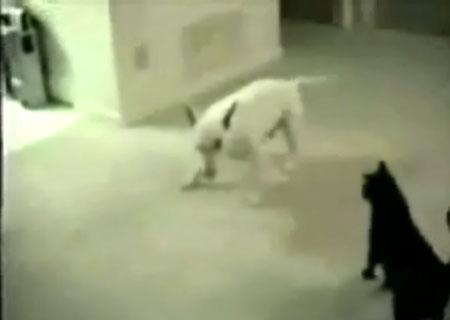 hundetull.jpg
